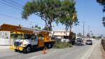 Montebello Tree Maintenance Program.jpg
